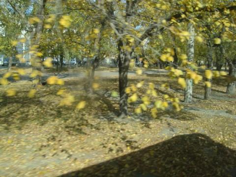 Осень в Бийске.
