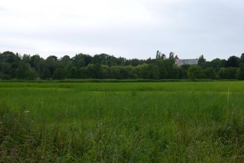 ТравА близ ТрАве