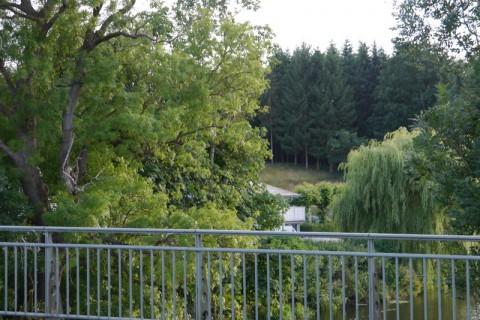 Деревья в Германии