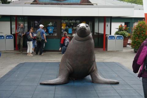 Тюлень или морской котик. Короче говоря, морж какой-то