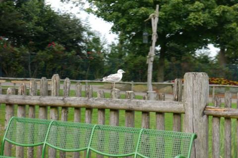 Птица в Hansa Park